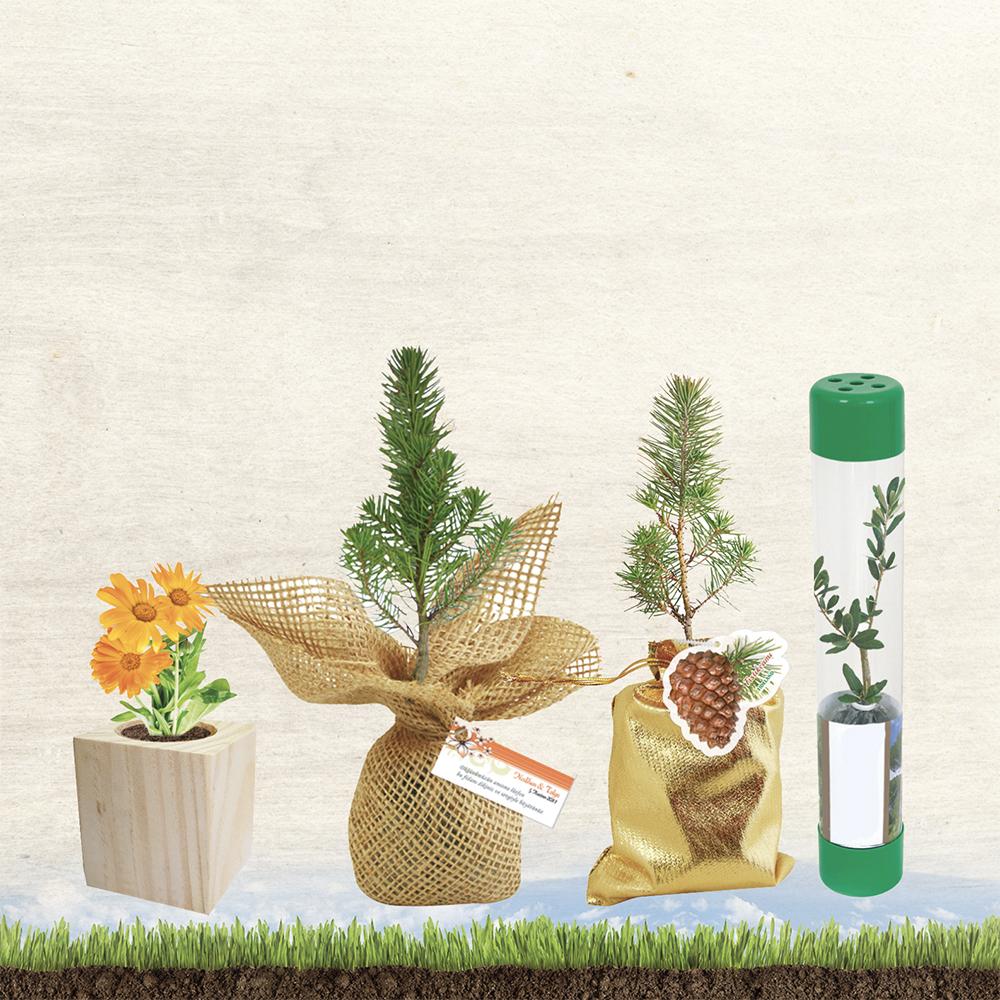 Flower and Tree Saplings
